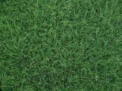 Buffalo Grass Pa Lawn Services Free Lawn Care Help